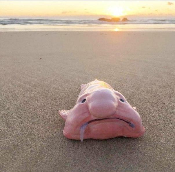 Мое состояние по утрам: рыба-капля