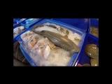 Полный обзор рыбного рынка в Паттайе уже на нашем канале YouTub Уехали - Travel TV. Жми ссылку и смотри https://youtu.be/9RUd87R