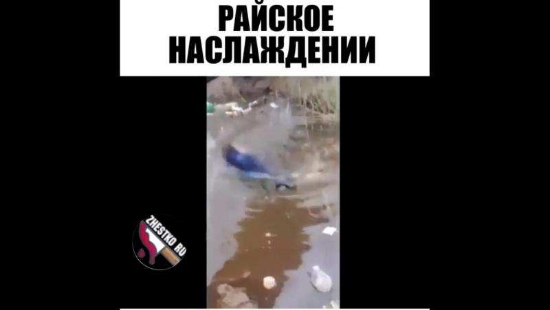 Zhestko_ru_1694826722217044346_2891619859.mp4