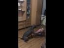 Питбуль - собака «убийца»