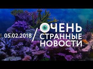 05.02 | ОСН #32. Кораллы в Таиланде