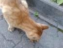 Рыжий кот у аптеки на Громовой 1
