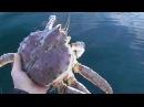 Рыбалка на Кольском п ве Поход на катере