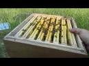 Один из способов создания отводков в улье УДАВ