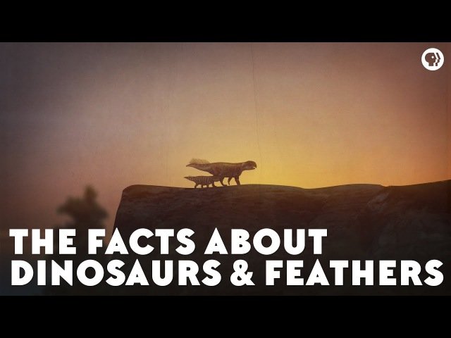 The Facts About Dinosaurs Feathers