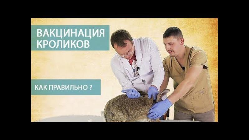 ВАКЦИНАЦИЯ КРОЛИКОВ (часть 3) \\ Как правильно делать прививки кроликам самостоят...