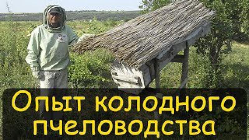 Колодное пчеловодство. Реальный опыт. Содержание пчел в колодах Владимир Петрушев