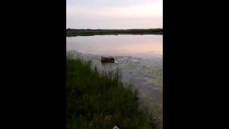 Джесси. Прогулка на озере. Jessie.