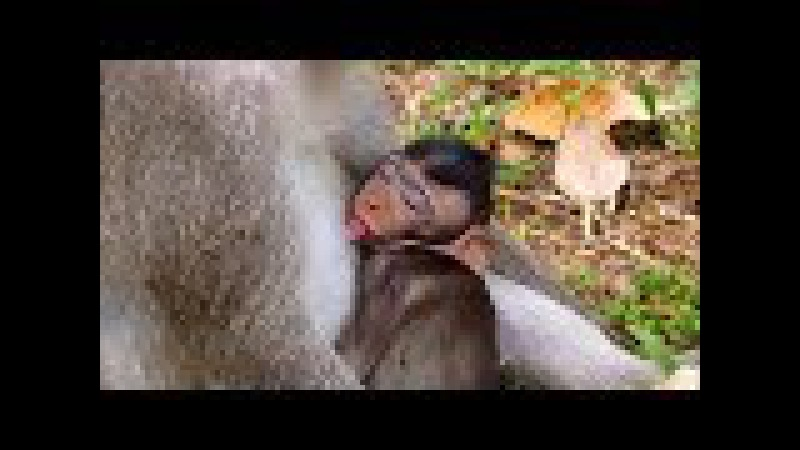A group of lovely small monkey sleeping video , Sleeping baby monkey , Animals Life - part 227