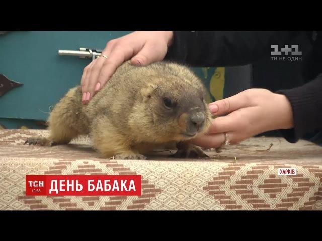 У Харкові бабак Тимко зробив власний прогноз погоди українцям