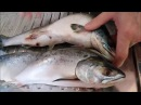 Разделка горбуши быстро без грязи Cutting salmon quickly without dirt