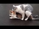 Секас котэ в Пороги-Бич