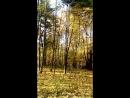 осень парк Кузьминки
