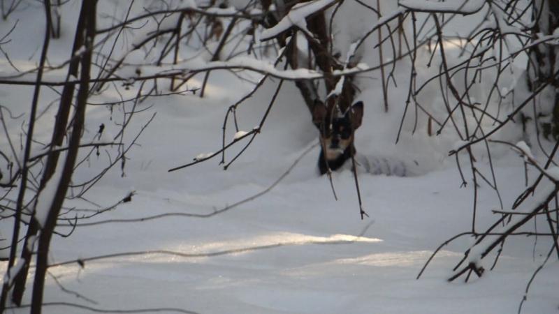 Бадик охотник за белкой