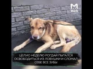 В Нижнем Новгороде после жестоких живодерских пыток собаке понадобилась помощь психологов