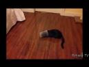 ПОПРОБУЙ НЕ ЗАСМЕЯТЬСЯ - Смешные Приколы и фейлы с Животными до слез, смешные коты