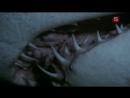 BBC Мир природы Из жизни акул BBC Natural World Sharks on Their Best Behaviour 1991