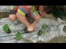 Выращивание рассады огурцов от и до. Фильм 1