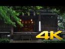 Tokyo Okusawa Shrine in the summer rain - 奥澤神社 - 4K Ultra HD