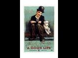 Vida de Cachorro (1918), de Charles Chaplin, completo e legendado