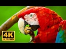 Colorful Macaw Parrots - Stunning Birds in 4K 🐦Sleep Relax Forest Ambient Sounds 4K TV Screensaver