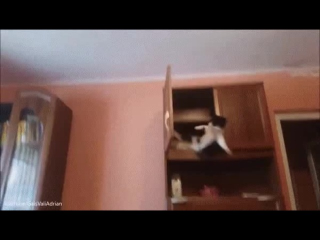Jackie Cat