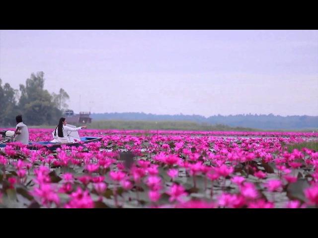 Море красных лотосов в Таиланде