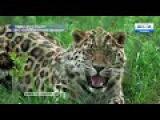 Как ученые подглядывают за животными на «Земле леопарда»