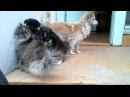 Собака ревнует щенков к кошке