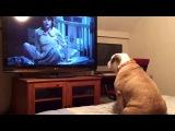 Пес смотрит фильм ужасов