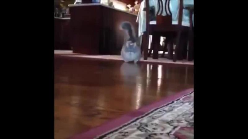Slow cat