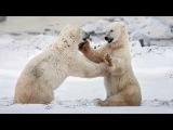Это Арктика - Игорь Корнилов (Foto S. Anisimov)