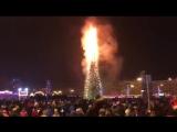 сгорела елка на Сахалине