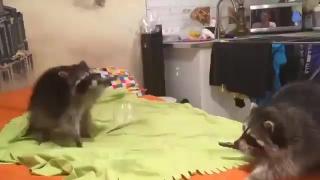 Пузыри и еноты