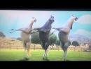 Вот как красива танцуют лошадки
