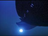 Подводная одиссея (Сиквест 2032) SeaQuest 2x14 - Watergate (Водные врата)