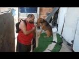 Настоящая дружба. Пес каждый день ждет своего хозяина домой, с работы...
