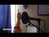 Версия песни Despacito в исполнении курицы