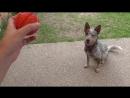 COLLAR LIKER Коллар игрушка для собак Мяч Лайкер