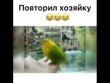 Попугай повторил хозяйку