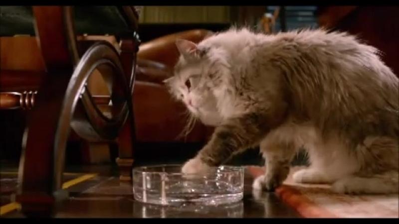 Мне бы такого кота
