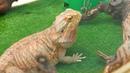 Контактный зоопарк В мире животных в ТЦ Лето
