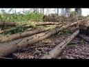 Спільна експедиція Лісової Варти WWF та СтопКору до Усть-Чорної