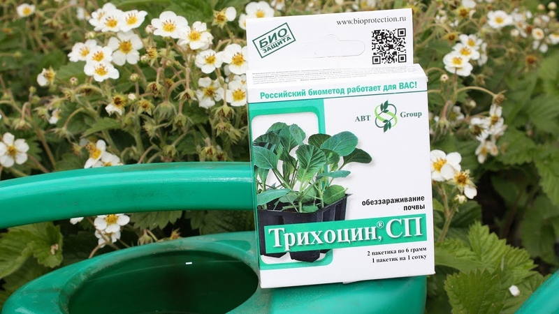 СРОЧНО Биопрепараты от болезней растений Сделайте это в июне!