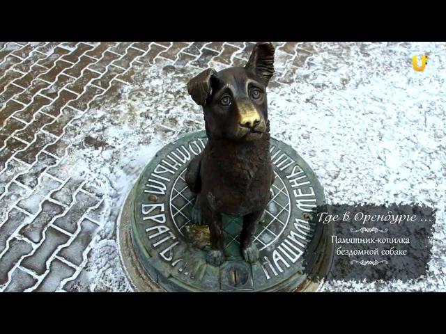 Где в Оренбурге Памятник копилка бездомной собаке