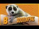 Контактный зоопарк - ВЛОГ Ника Лайк Лемур, Енот, Сурикаты, Кенгуру и Белая лиса
