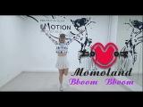 MOMOLAND (