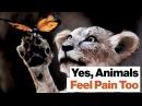 Ричард Докинз этика обращения с животными Чувствуют ли животные боль