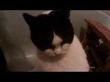 Прикол нормальный - мои кошаки в ванной (