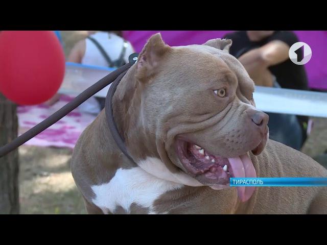 Выставка собак в Тирасполе